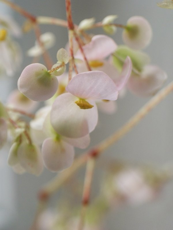 цветы , а за окном зима - Тамара
