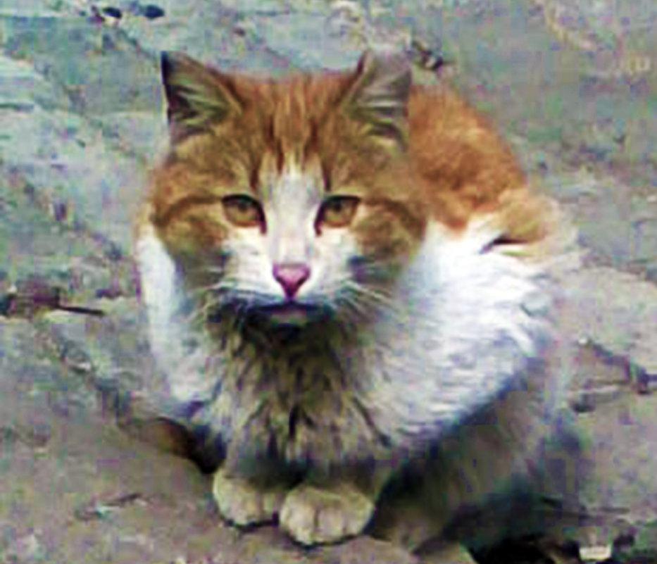 Кошка без дома и хозяев - Владимир Ростовский