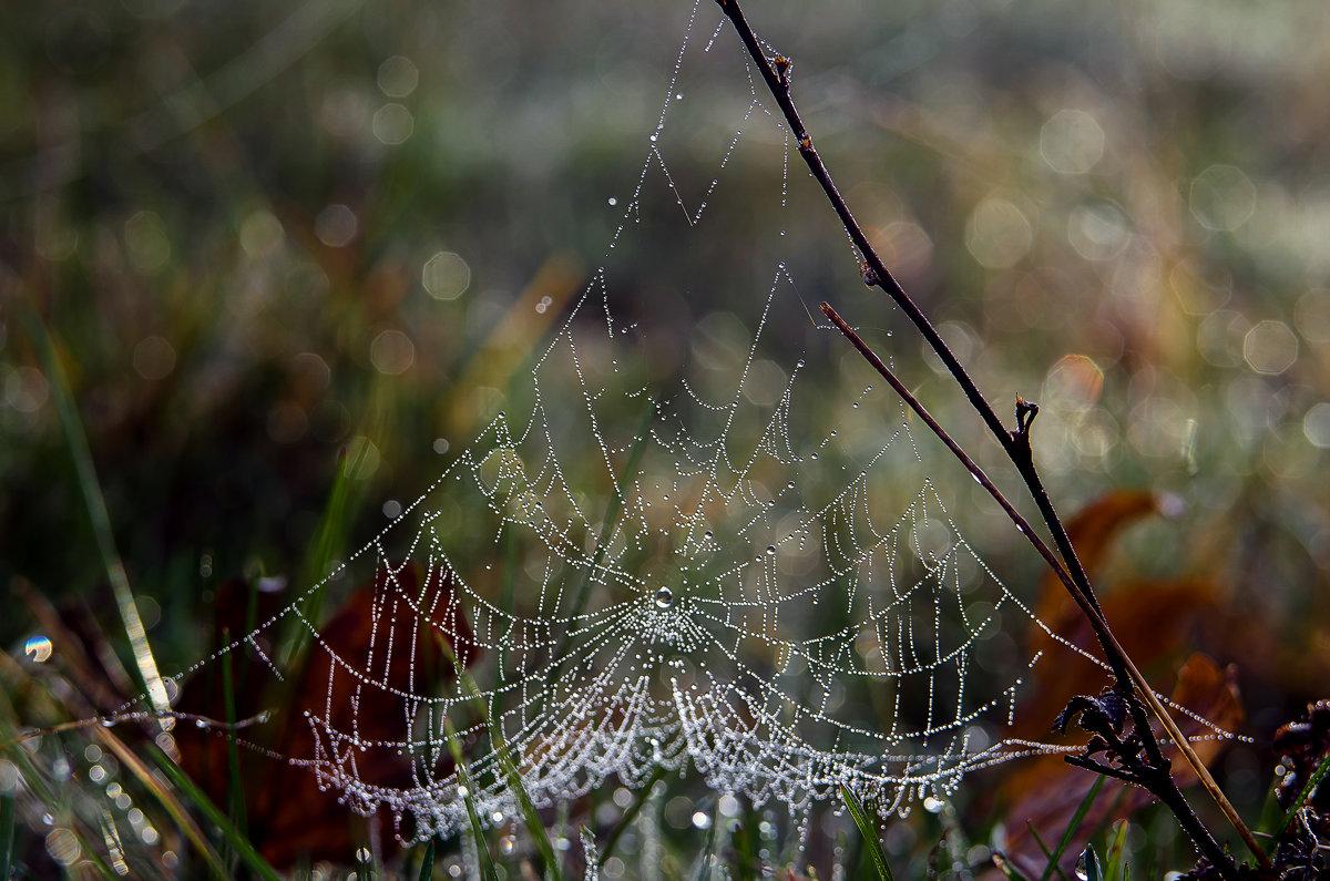 Осенняя паутинка - Елена Куценко