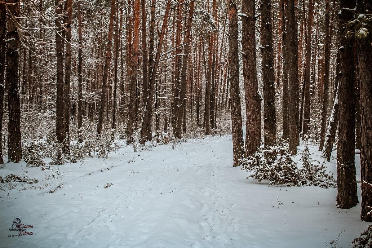 зимний лес - Yana Odintsova