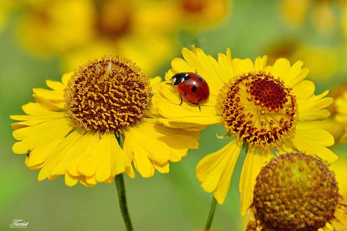 Красно-желтое - Paparazzi