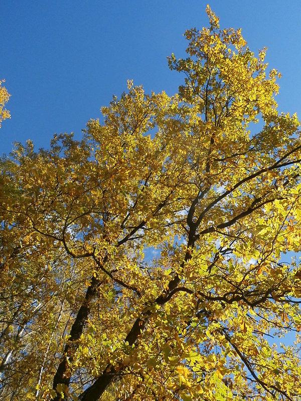 Прекрасная осень - Ксения Мифэйр