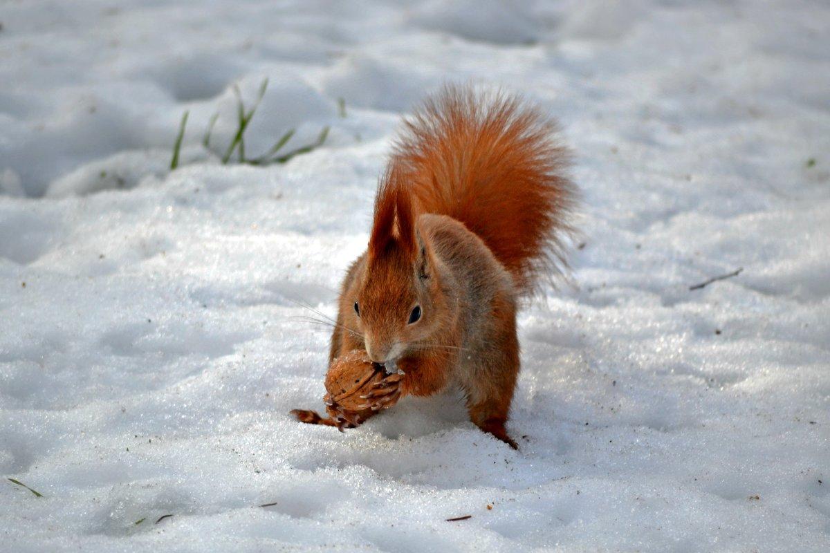 Запасу орешки впрок, буду щёлкать «цок-цок-цок! - Nina Streapan