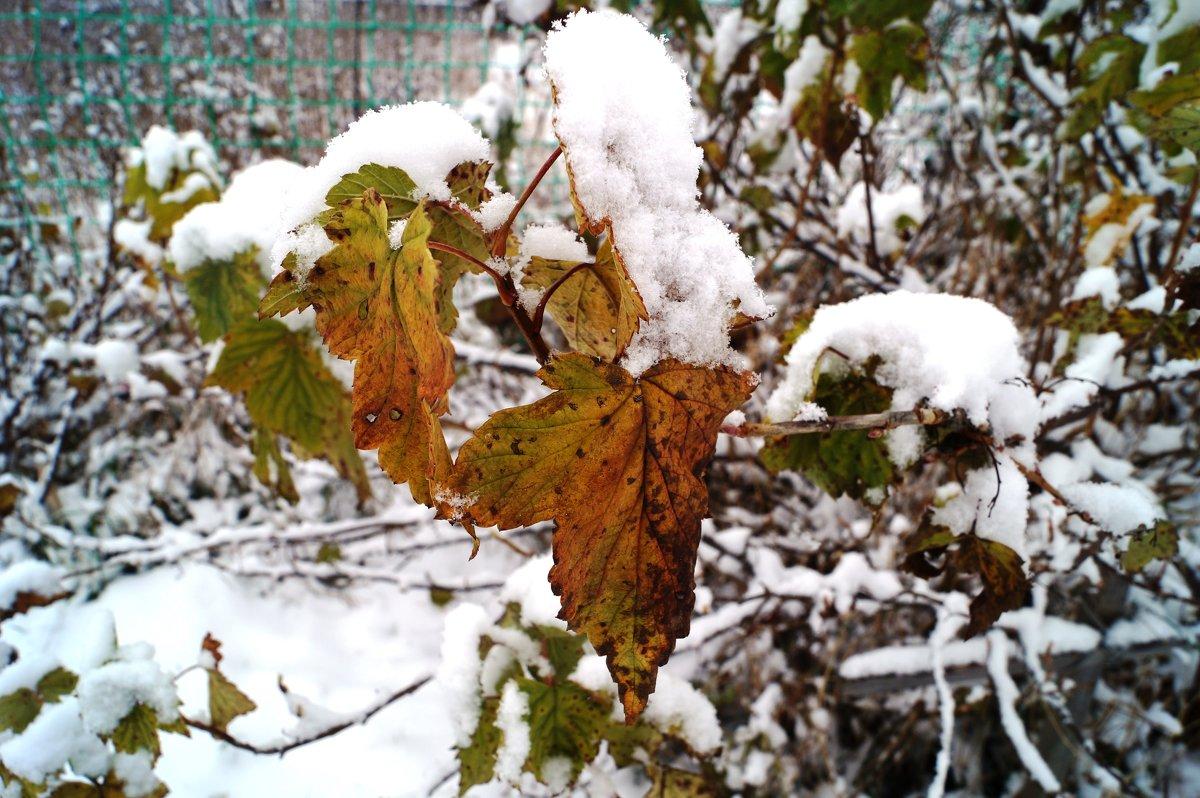 первый снег - Наталья Зимирева