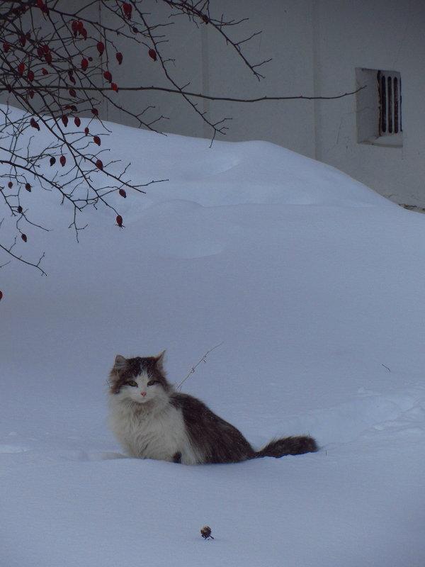 Я здесь живу - Андрей Лукьянов