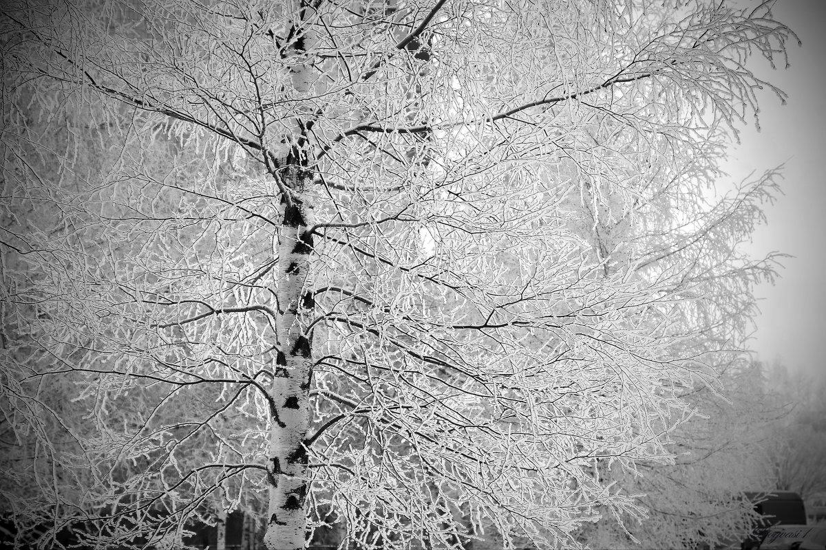 Белая береза - Василий Богданов