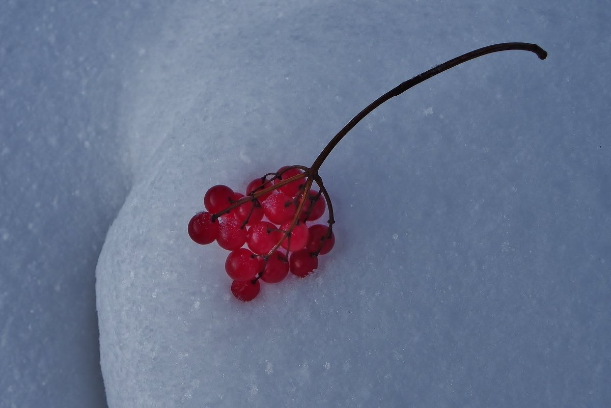 Рубиновые ягоды - Святец Вячеслав