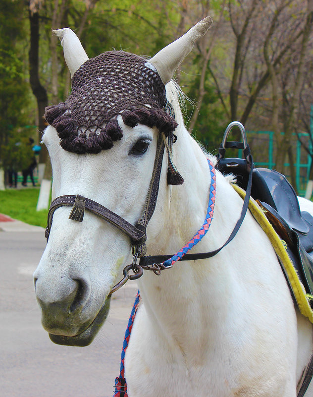 Работник зоопарка - Светлана
