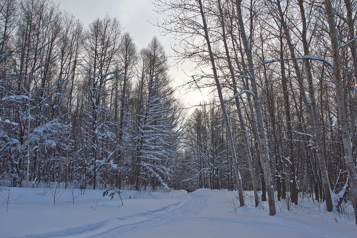 на лыжне - Седа Ковтун