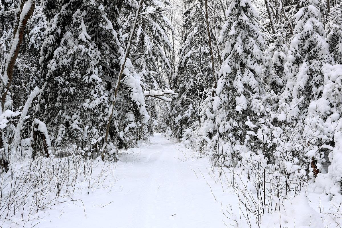 зимняя дорога - александр пеньков