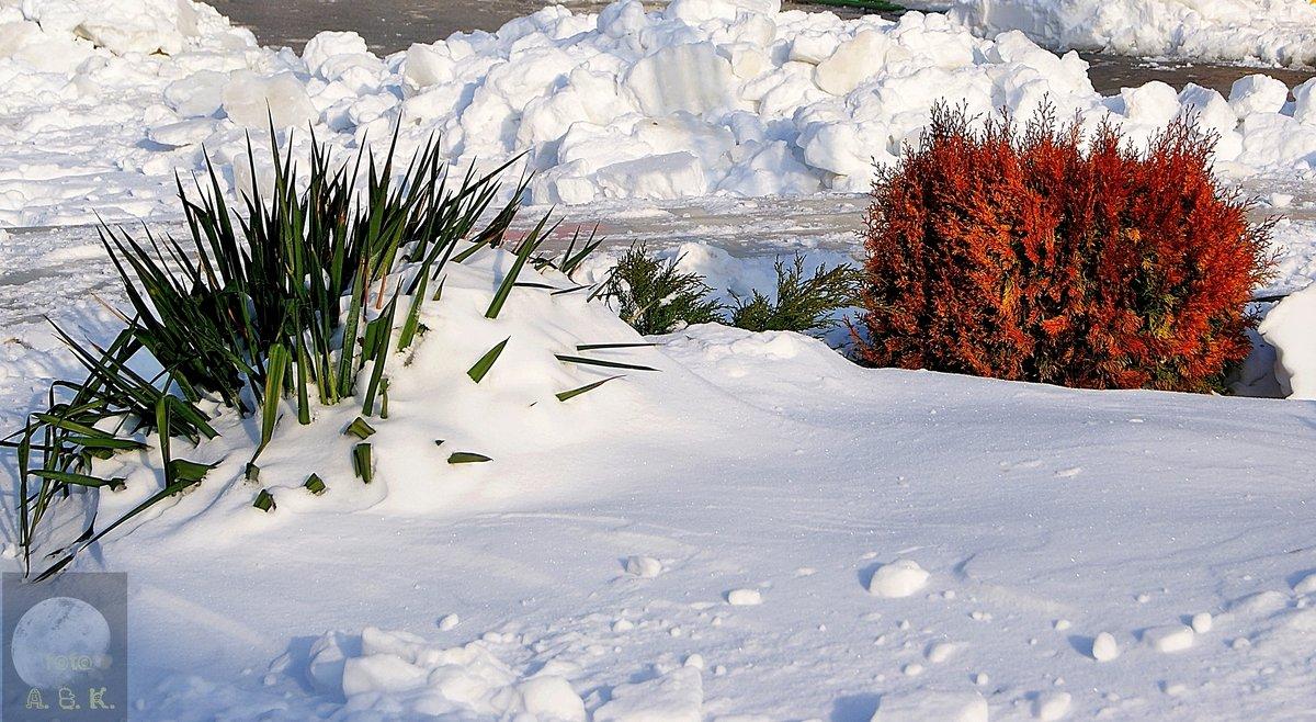 зимние контрасты - Александр Корчемный