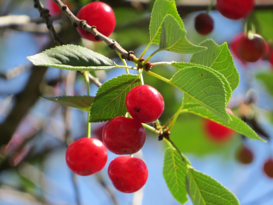 прекрасен ягод аромат - валя