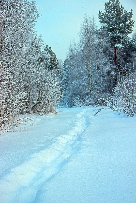 Зима. - Бронислав Богачевский