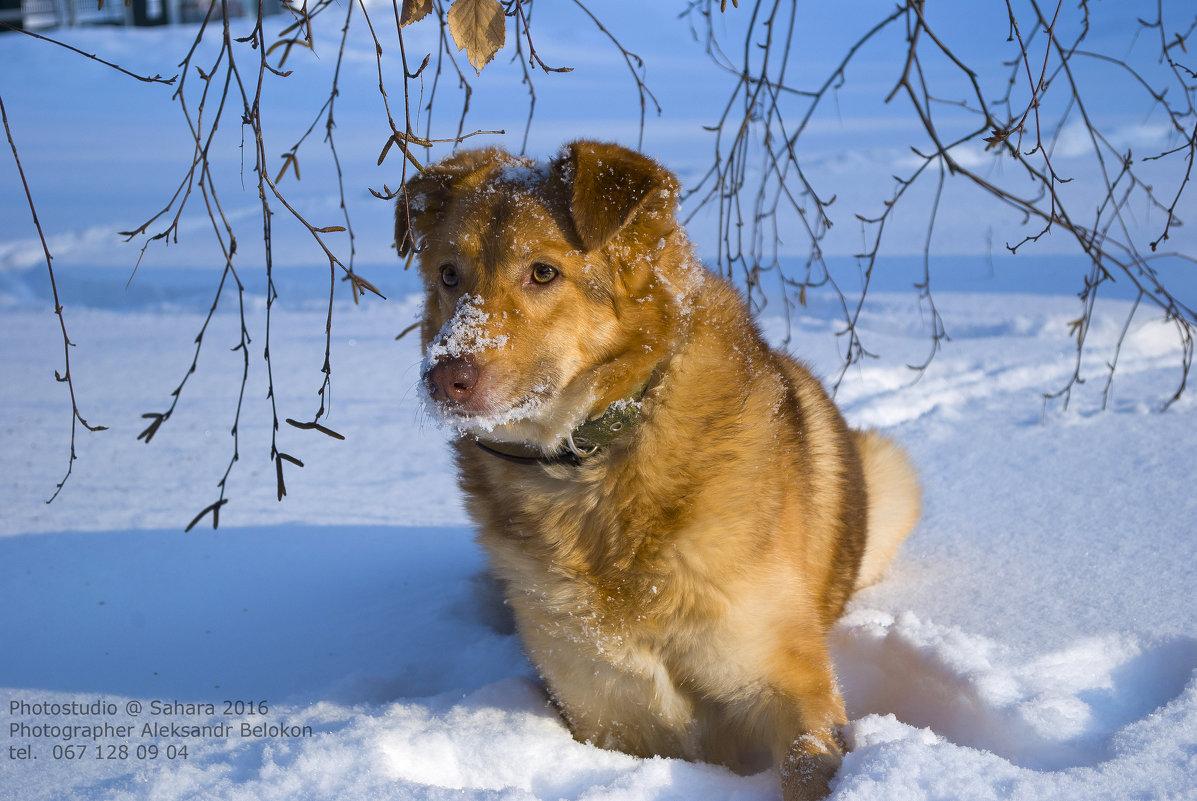 У нас теперь тоже зима - Александр Белоконь