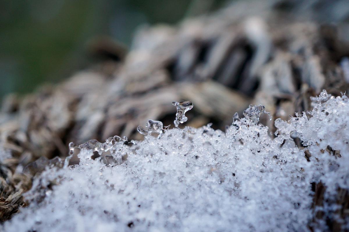 Зимнее творчество природы - Андрей Майоров