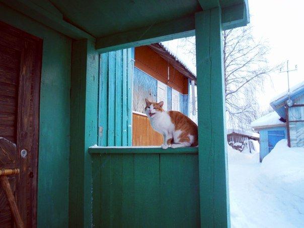 """Домой хочу, нагулялся уже!"" - Николай Туркин"
