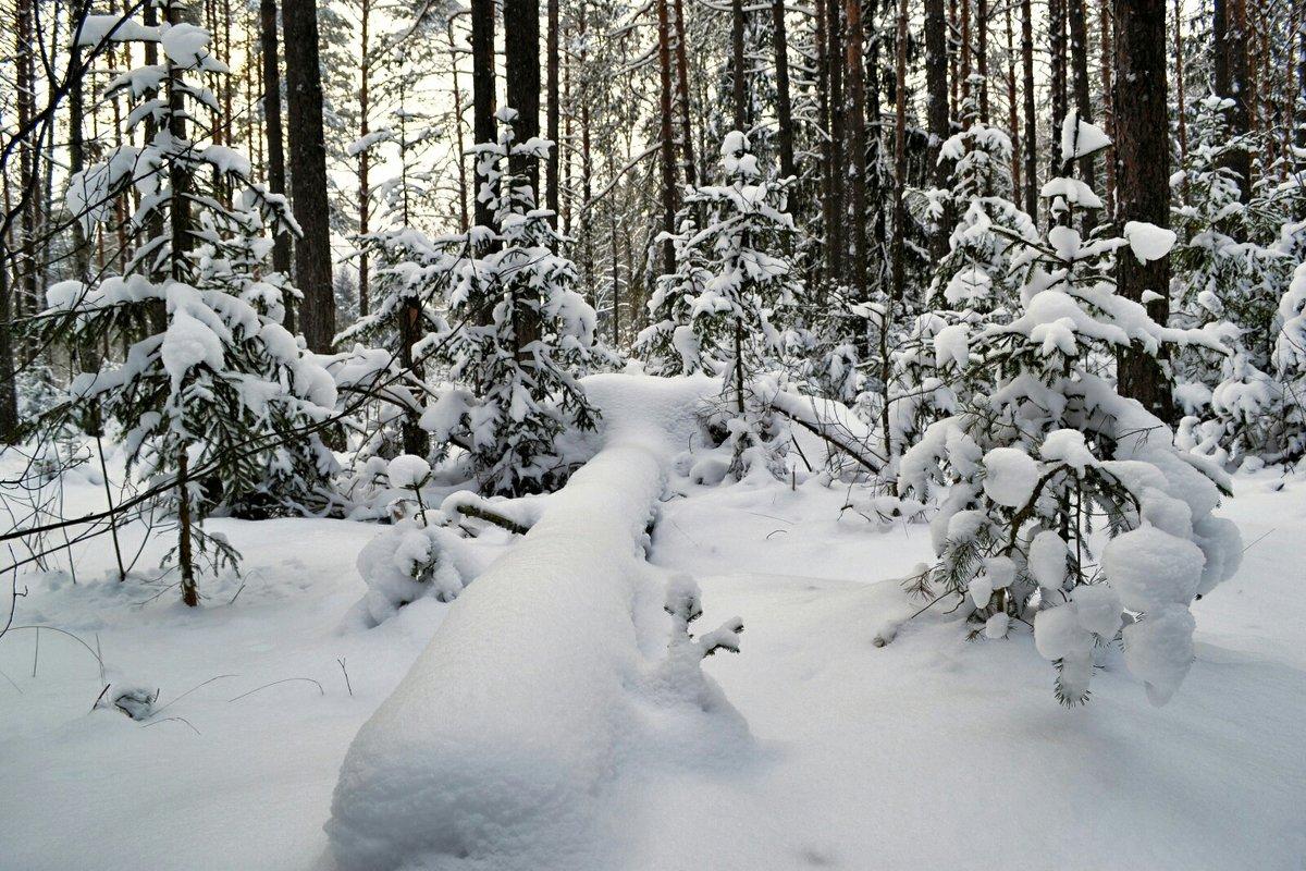 Во власти снега - Милешкин Владимир Алексеевич