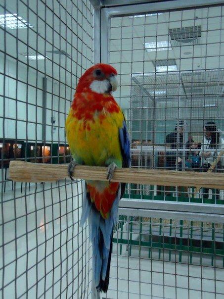 Попугай - Сергей
