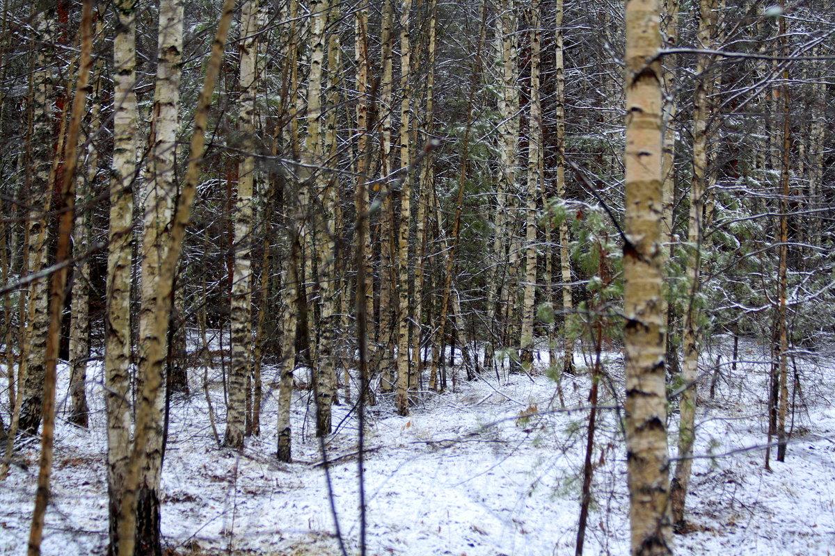 В зимнем лесу. - Николай Масляев