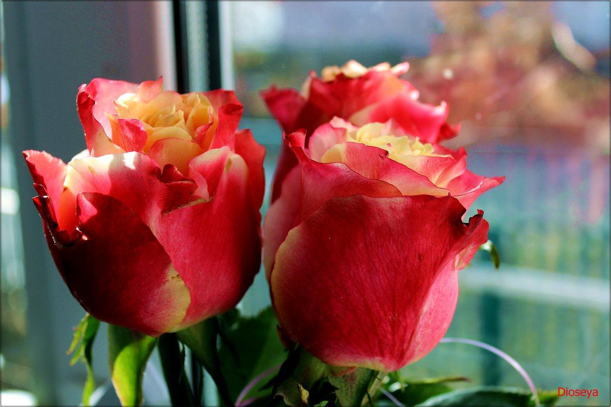 Розы на окне - Татьяна Пальчикова
