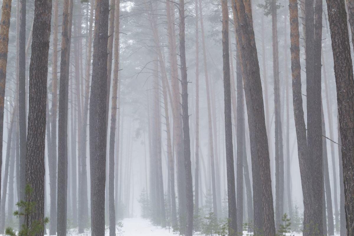 Линии леса - Сергей Корнев