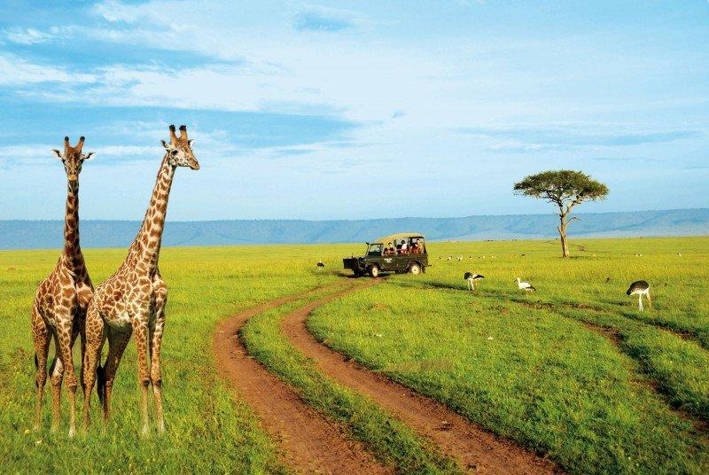 НАЦИОНАЛЬНЫЙ ПАРК АМБОСЕЛИ (КЕНИЯ) - Volmar Safaris