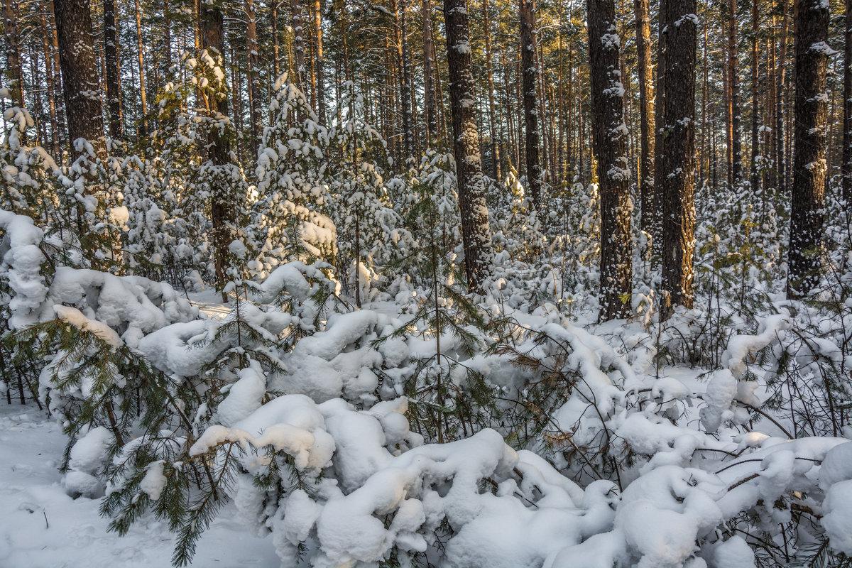 В бору зимой - Андрей Поляков