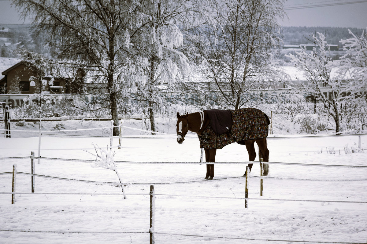 Зимний вечер(вариант) - Aнна Зарубина