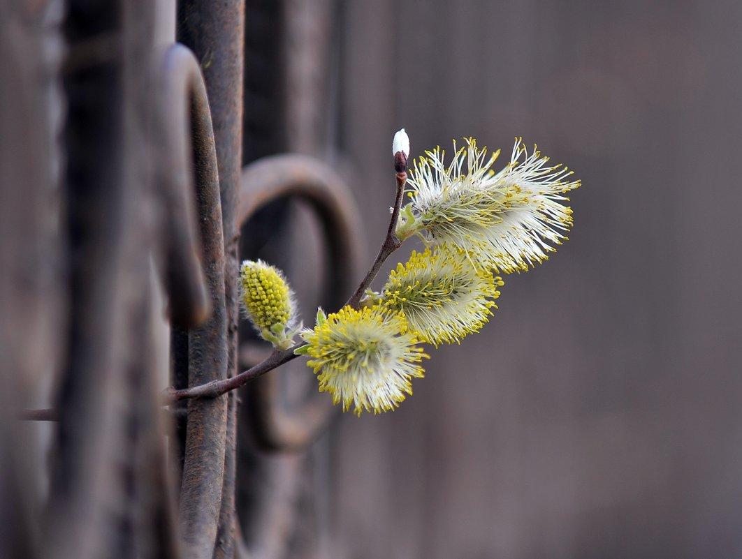 Весна приходит - живое проникает - Михаил Плецкий