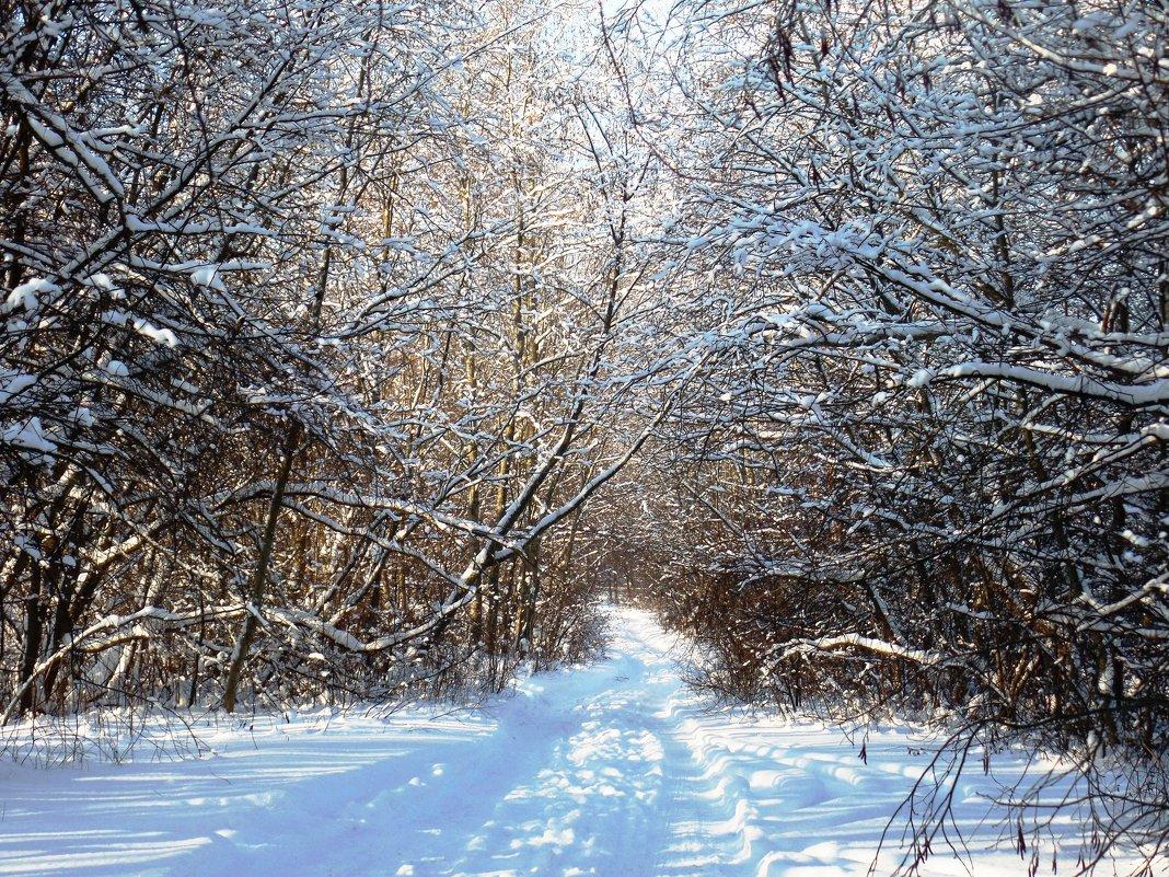 Зимняя дорога... - Марина Харченкова
