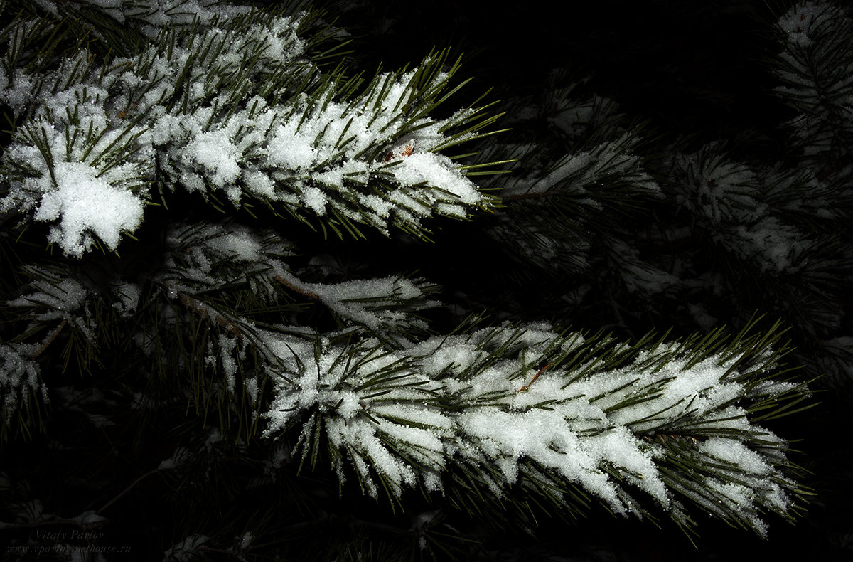 Снег - Виталий Павлов