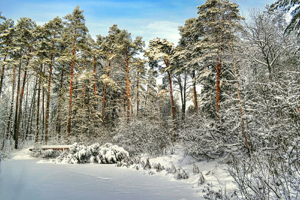 Зимний пейзаж - Милешкин Владимир Алексеевич
