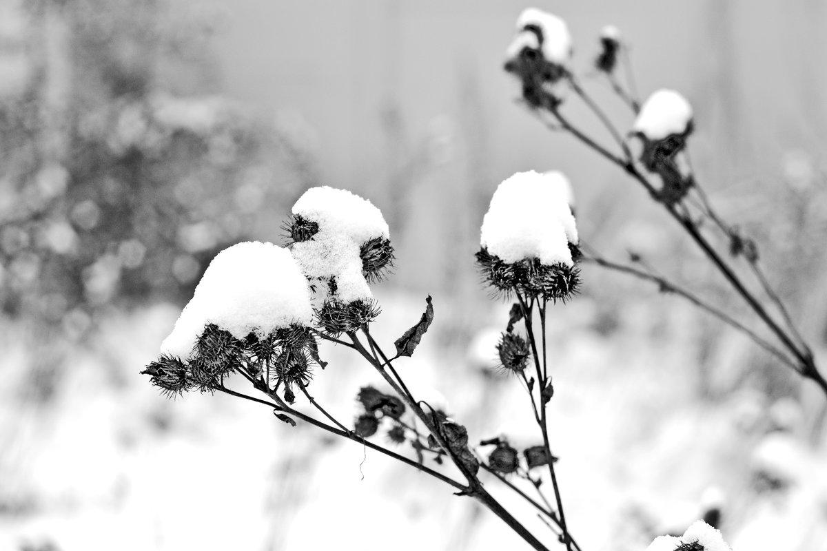 Зимушка -зима - Сергей F