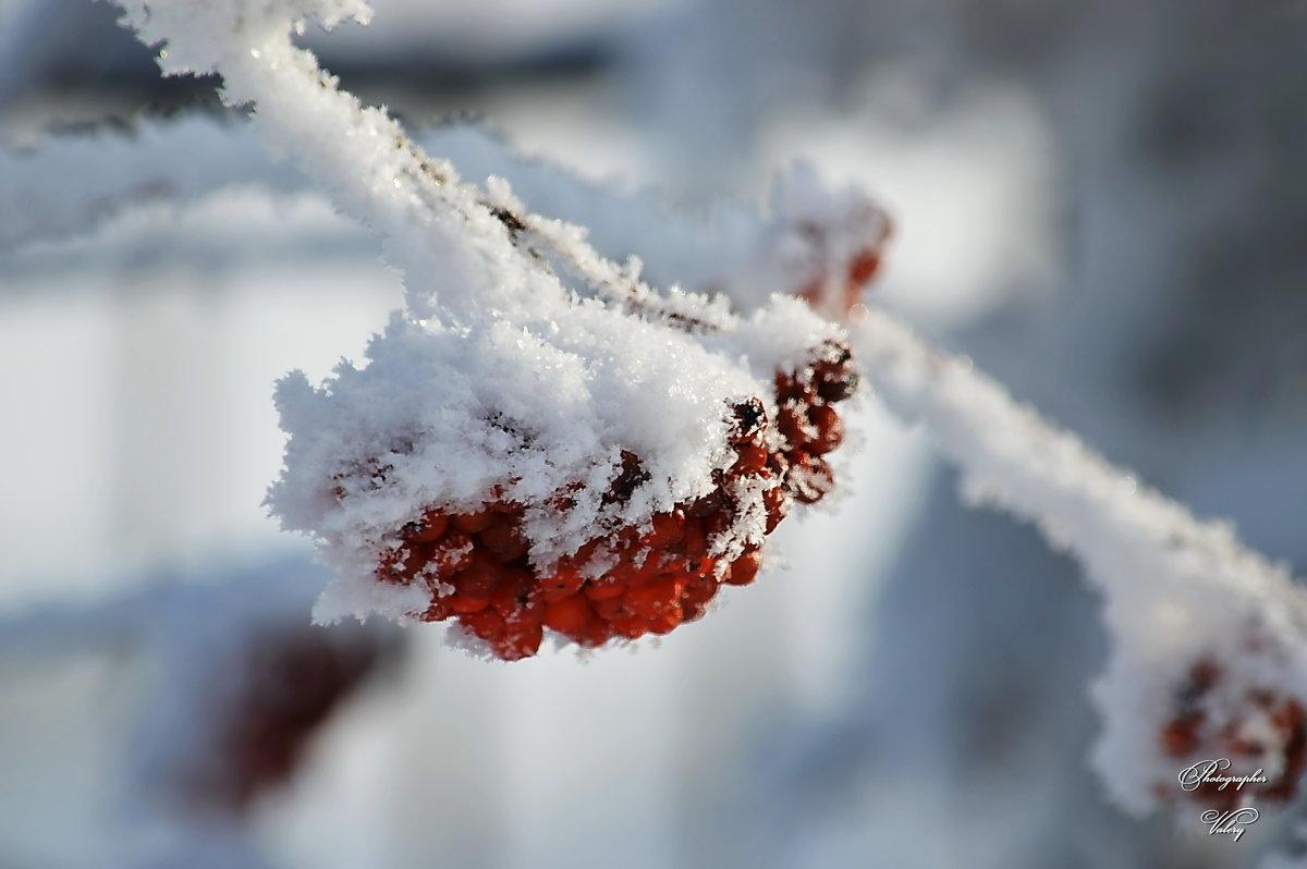 Кристаллы и рябина - Валерий Лазарев