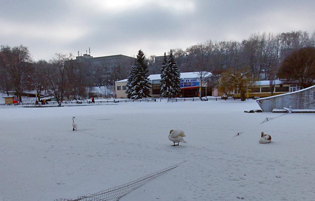 Зимний парк. - Наталья