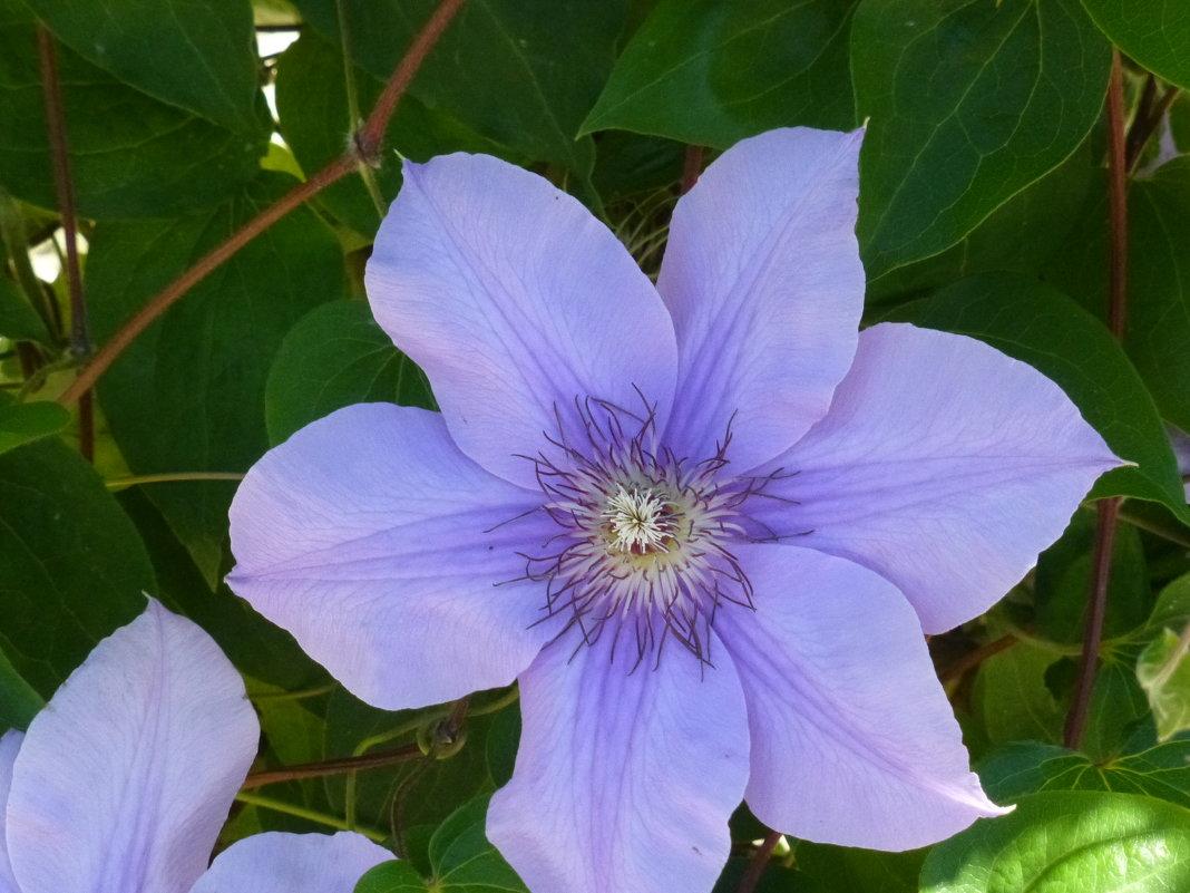 Никитский ботанический сад - Наиля