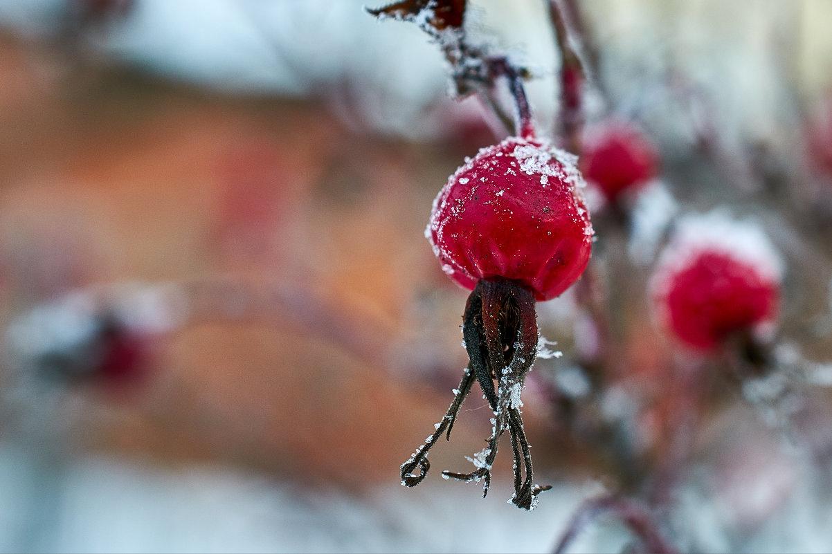 Зимой и летом - одним цветом. Продолжение. - Андрей Куприянов