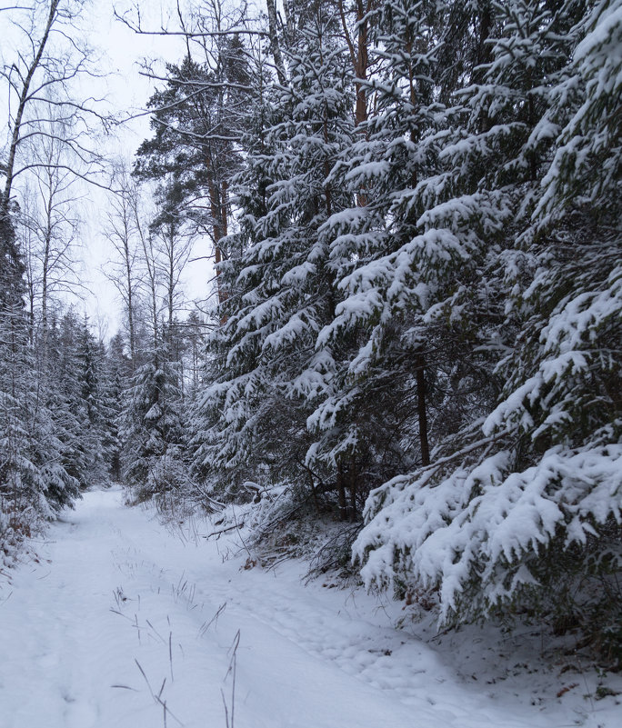 После снегопада - Светлана