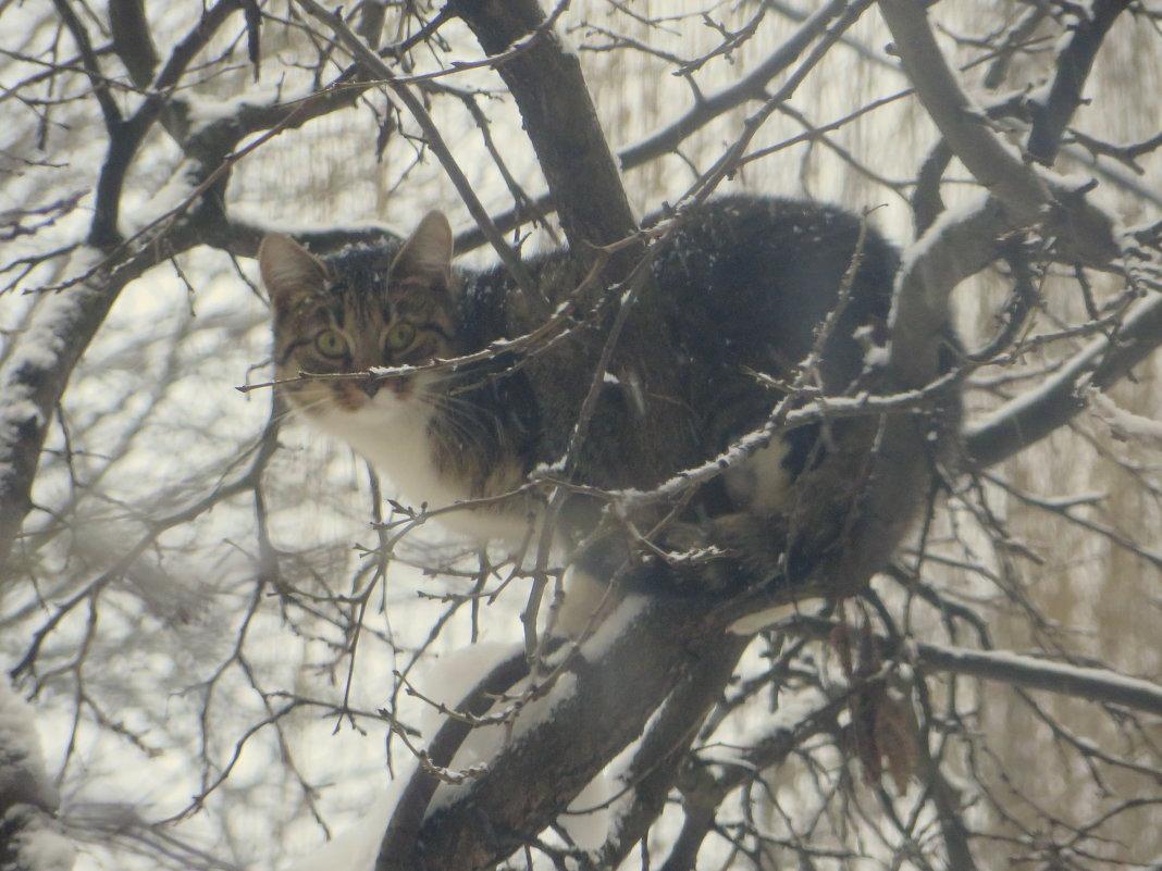 Охотник за птицами! - Ирина Олехнович