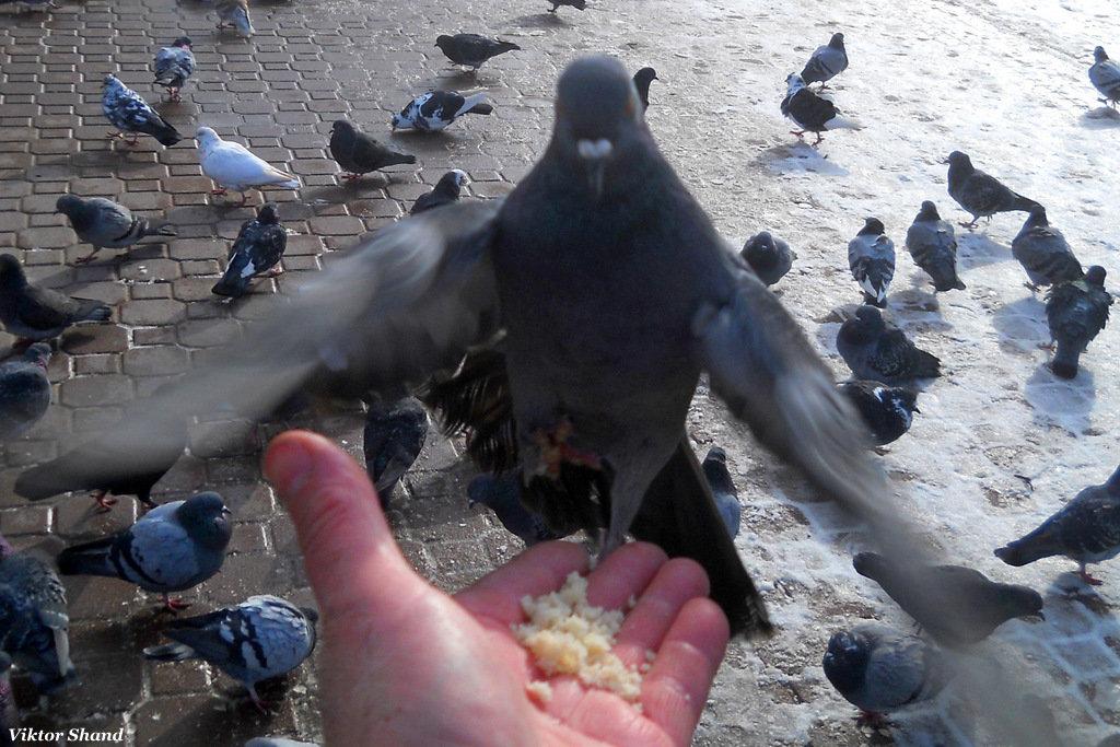 Птицы зимой - Виктор Шандыбин