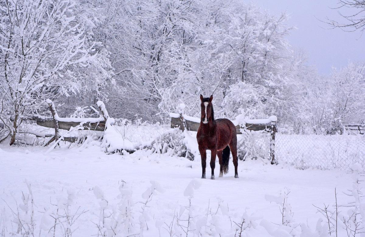 Бездомный конь - Нина