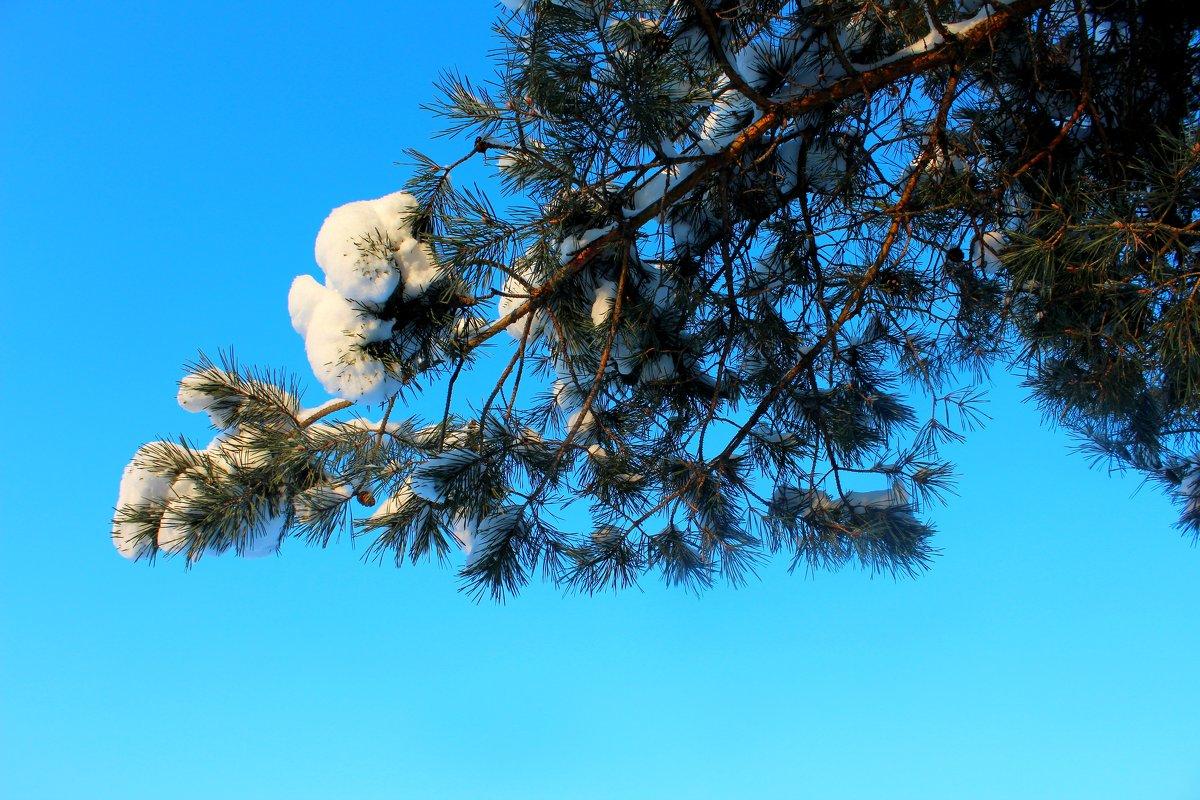Прекрасное зимнее небо - Катя Бокова