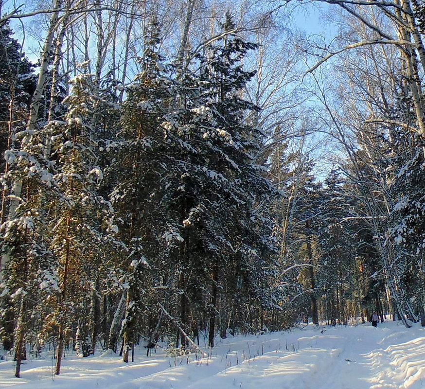 Прогулка в лесу. - Мила Бовкун