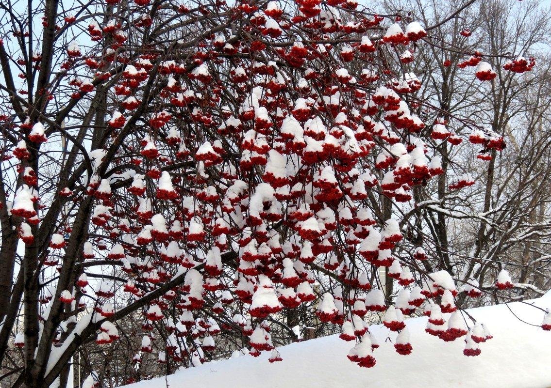 Зима - Марина