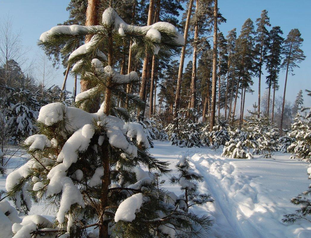 Тропинка в лесу - Olga Golub