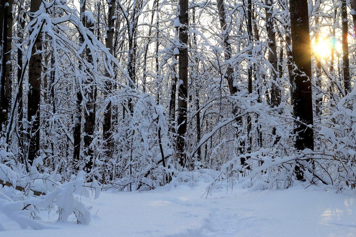 Зимний лес! - Наташа Шамаева