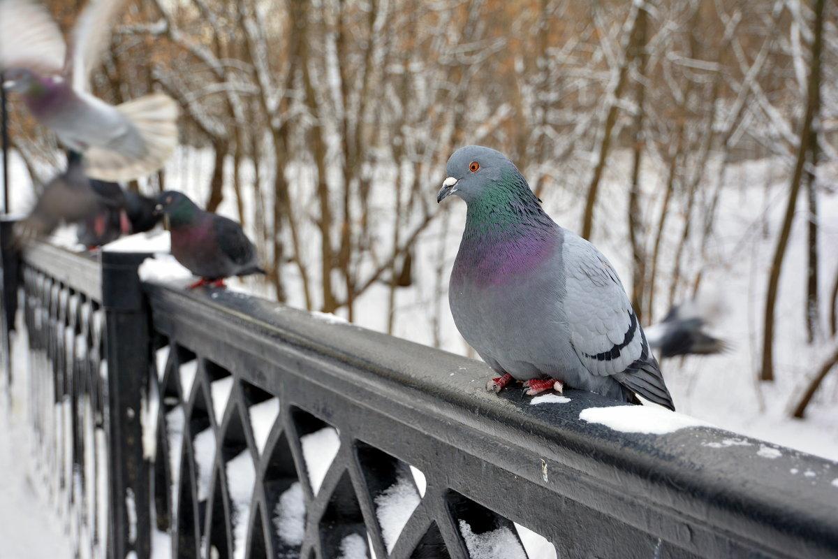 зима... - Светлана Прилуцких