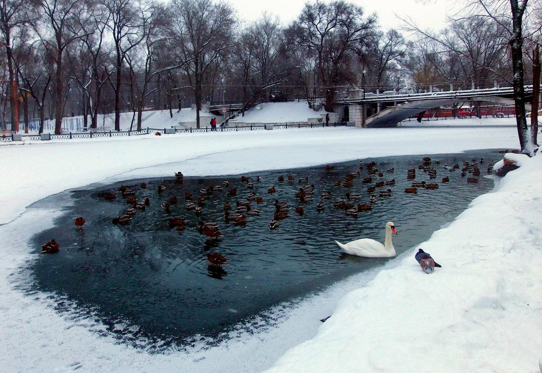 Озеро на замерзшем пруду...! - Наталья