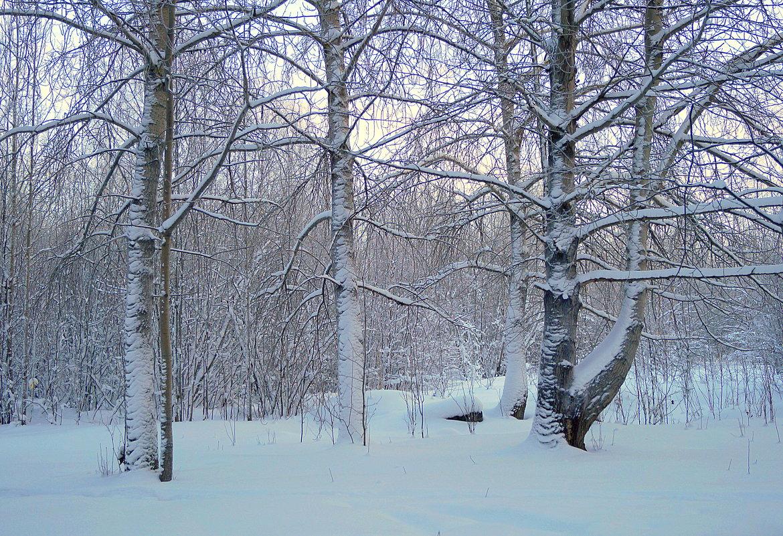 После снегопада - Елена Перевозникова