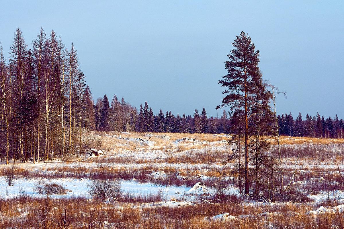Подмосковный лес - Андрей Куприянов